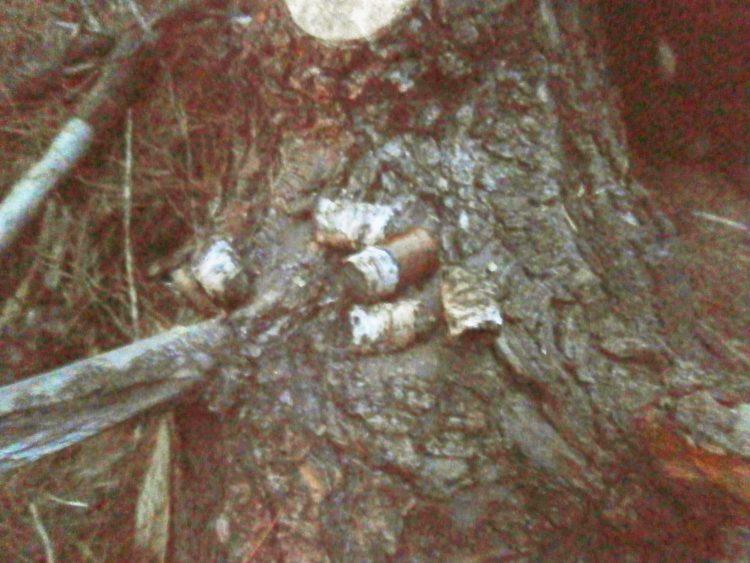 Montecristo Double Corona Edición Limitada 2001 unlit